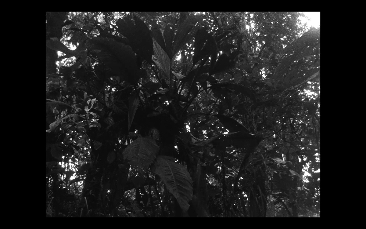 Plantas Populares – Movimiento : Agitato, film still, 2013. 16mm B&W film. 14 minutes, 30 seconds.