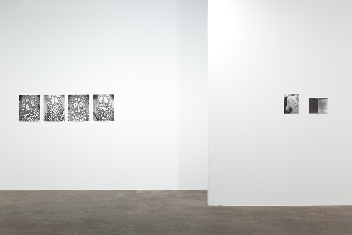 Jochen Lempert, installation view, Midway Contemporary Art. Left: Honey Guides of Digitalis, 2011. 4 foliograms, silver gelatin prints. 19 ½ x 15 ½ inches each, 19 ½ x 69 ½ inches overall. Right: Anna Atkins, 2011. B&w photograph and photogram, silver gelatin prints. 9 x 11 ½ inches and 11 ½ x 9 inches.