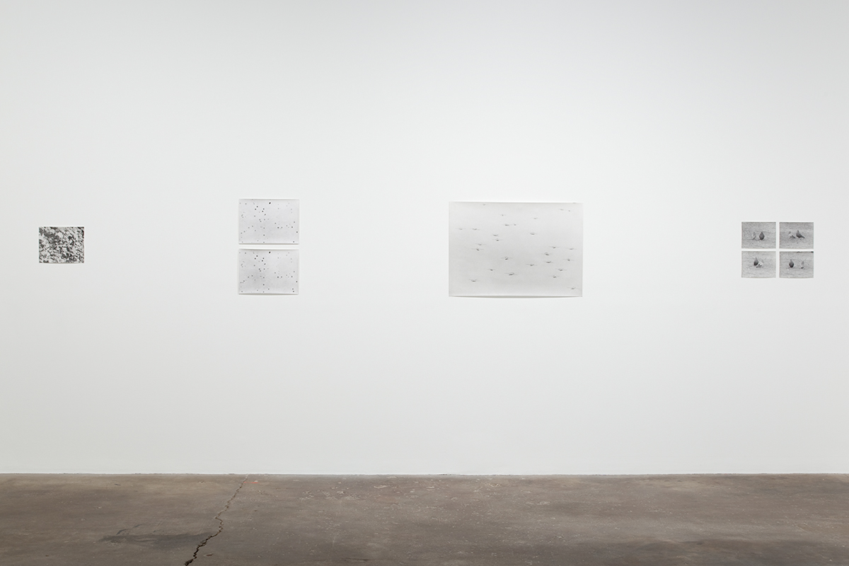 Jochen Lempert, installation view, Midway Contemporary Art.
