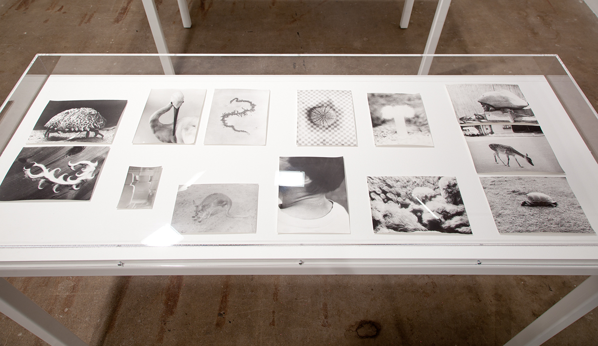 Symmetrie & Körperbau (Symmetry & Architecture of the Body), 1995-2012. Various sized b&w photographs, silver gelatin prints. Dimensions variable.