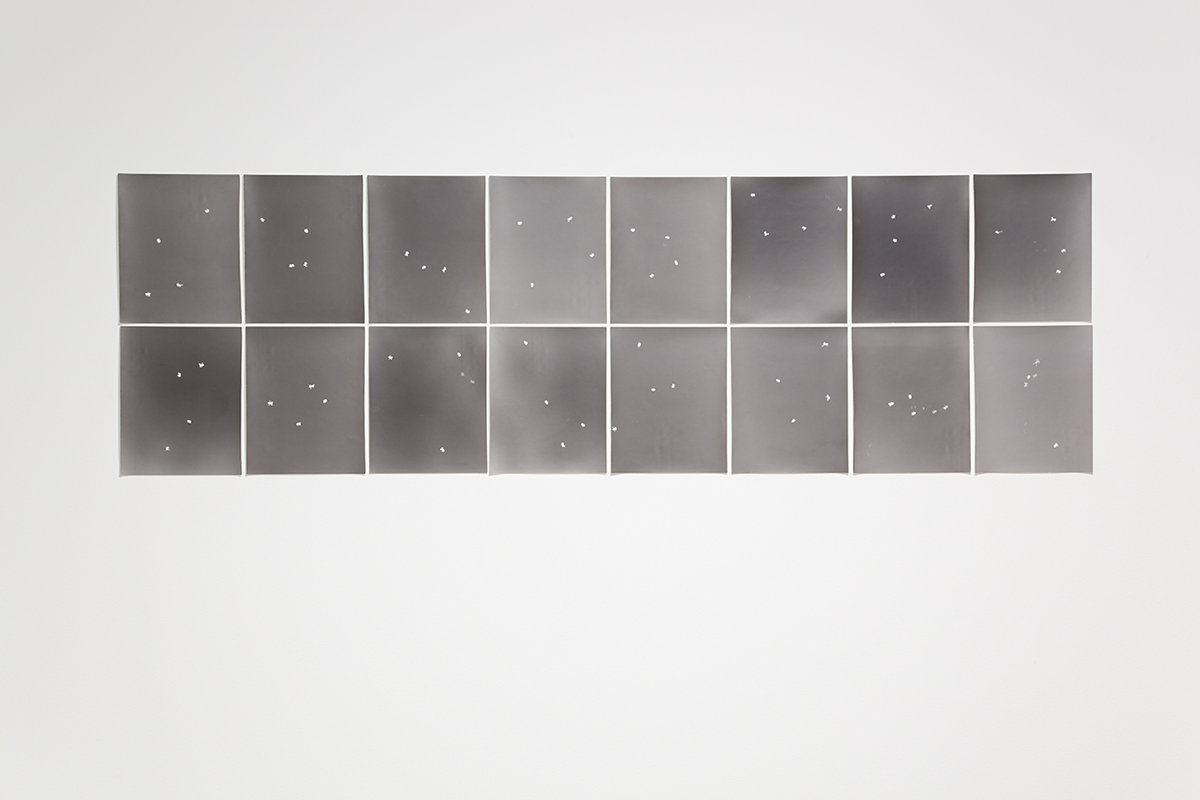 Four frogs, 2010. 16 b&w photograms, gelatin silver prints. 11 ¾ x 9 ½ inches each.
