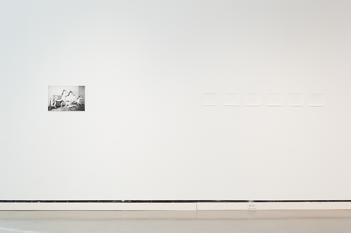 Jochen Lempert, installation view, Rochester Art Center. Left: Kiangs 2005, 2007, b&w photograph, silver gelatin print. 13 ½ x 19 ½ inches. Right: Schwarm (Blässgänse) / Swarm (White fronted Geese), 2004. 6 b&w photographs, silver gelatin prints. 9 ½ x 7 inches each. German Bight at N 54 00 20, E 6 48 10, 10.29.2003, 8.32 - 8.34 (UTC).