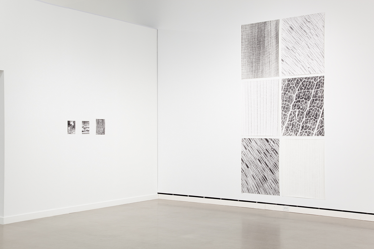 Jochen Lempert, installation view, Rochester Art Center. Left: Zur Photosynthese (On Photosynthesis), 2009. 3 b&w photographs, silver gelatin prints. 11 ¾ x 9 ¼ inches, 9 ½ x 7 inches, 9 ½ x 7 inches. Right: Transmission 1-6, 2009. 6 foliograms on paper, silver gelatin prints. 41 x 31 ¾ inches each.