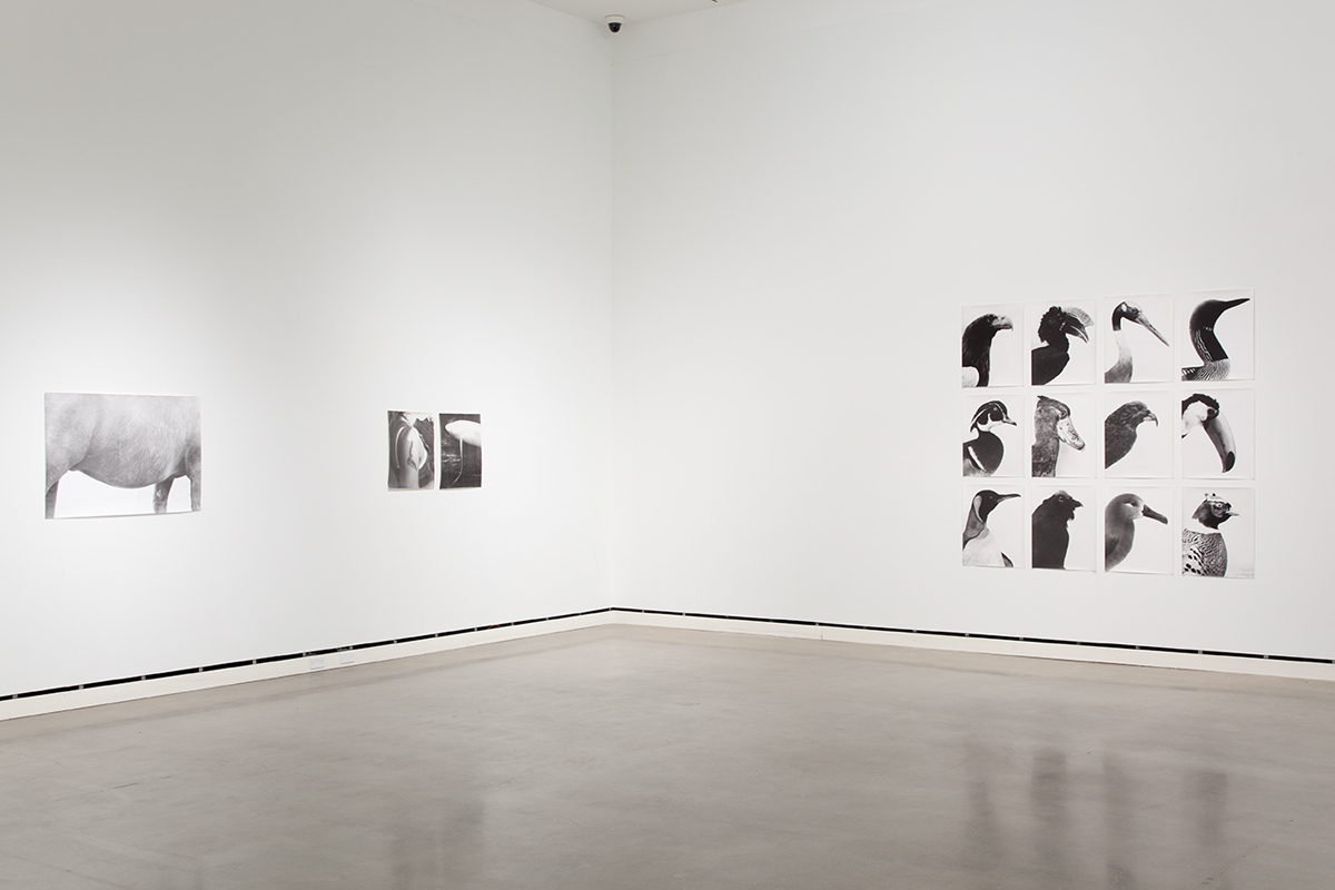 Jochen Lempert, installation view, Rochester Art Center.