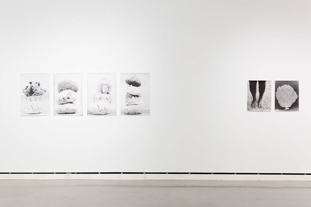 Jochen Lempert, installation view, Rochester Art Center. Left: Schwammtürme (Spongetowers), 1997. 4 b&w photographs, silver gelatin prints. 30 ¾ x 21 inches each. Right: Symmetrie & Körperbau (Symmetry & Architecture of the Body) (shoes, coral), 1995. 2 b&w photographs, silver gelatin prints. 21 ½ x 16 ½ inches each.