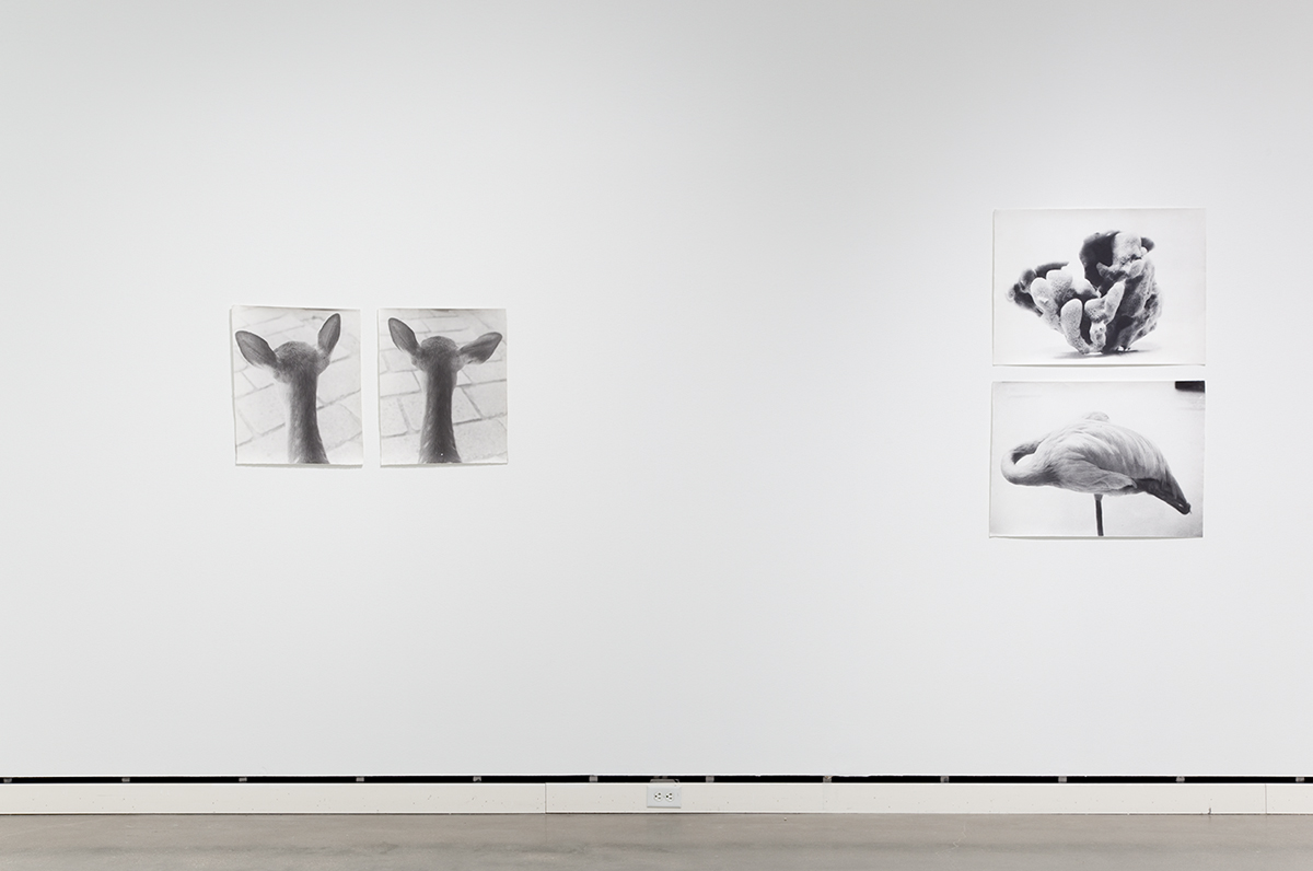 Jochen Lempert, installation view, Rochester Art Center. Left: Symmetrie & Körperbau (Symmetry & Architecture of the Body) (deer), 1995. 2 b&w photographs, silver gelatin prints. 21 ¼ x 17 ¼ inches each. Right: Symmetrie & Körperbau (Symmetry & Architecture of the Body) (sponge, flamingo), 1997. 2 b&w photographs, silver gelatin prints. 21 x 28 ¾ inches each.