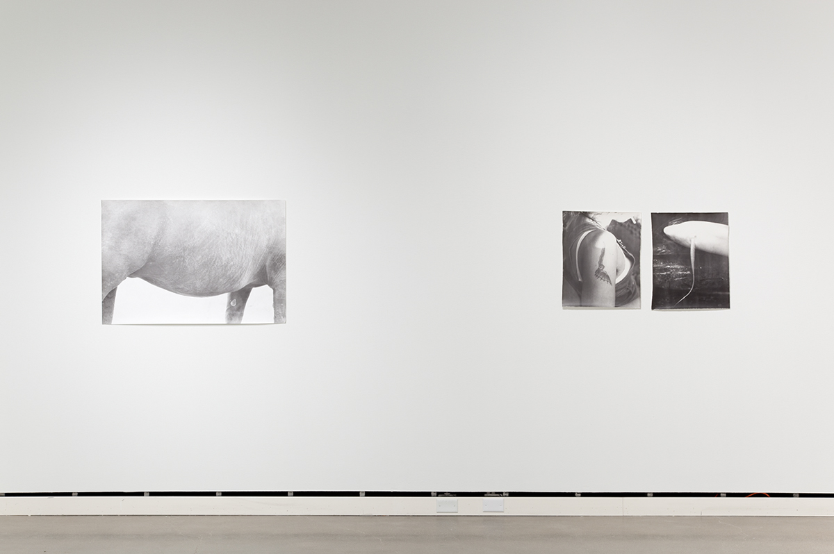 Jochen Lempert, installation view, Rochester Art Center. Left: Symmetrie & Körperbau (Symmetry & Architecture of the Body) (horse), 1997. B&w photograph, silver gelatin print. 27 ½ x 41 inches. Right: Symmetrie & Körperbau (Symmetry & Architecture of the Body) (tattoo, fish), 1995. 2 b&w photographs, silver gelatin prints. 21 ¼ x 17 ¼ inches each.