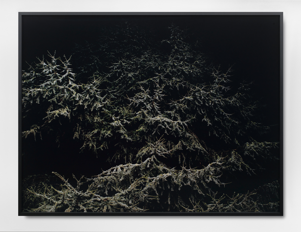 Untitled, 2010. C-print. 59 x 78 ¾ inches, framed.