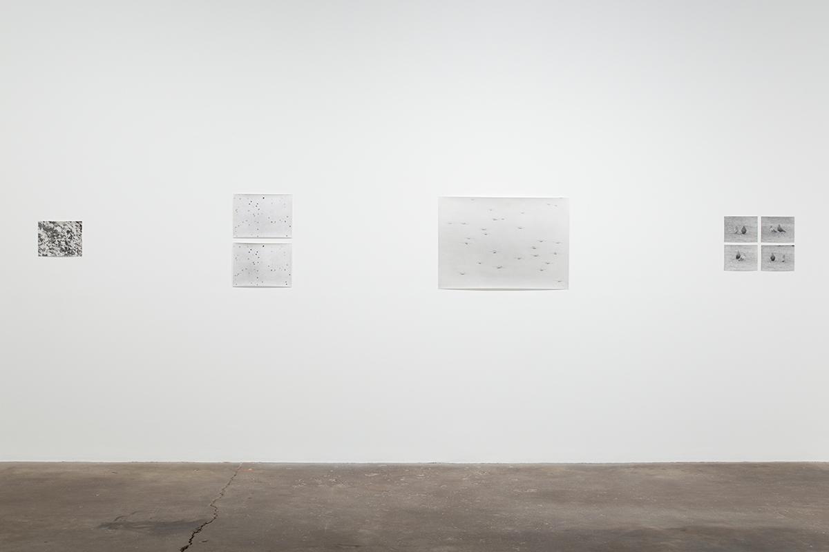 Jochen Lempert, installation view, Midway Contemporary Art.