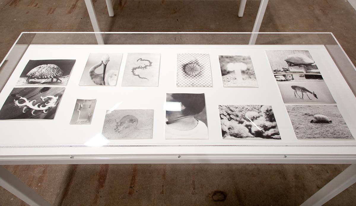 Symmetrie & Körperbau (Symmetry & Architecture of the Body), 1995-2012. Various sized b&w photographs, silver gelatin prints. Dimensions variable.