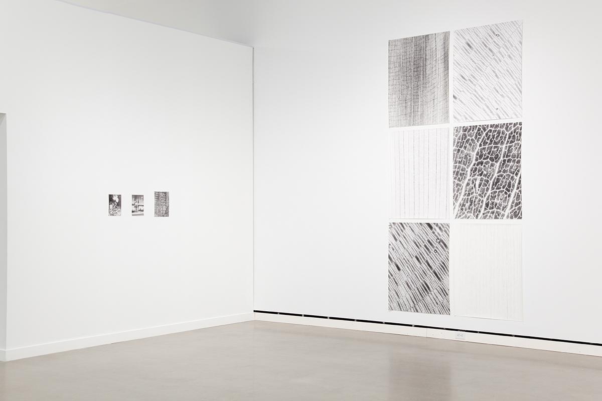 Jochen Lempert, installation view, Rochester Art Center. Left: Zur Photosynthese (On Photosynthesis), 2009. 3 b&w photographs, silver gelatin prints. 11 ¾ x 9 ¼ inches, 9 ½ x 7 inches, 9 ½ x 7 inches. Right: Transmission 1-6, 2009. 6 foliograms on paper, silver gelatin prints. 41 x 31 ¾ inches each.