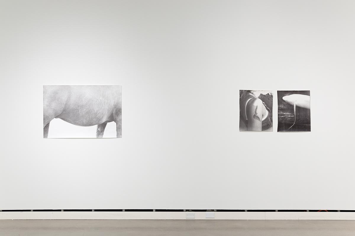 Jochen Lempert, installation view, Rochester Art Center. Left: Symmetrie & Körperbau (Symmetry & Architecture of the Body) (horse), 1997. B&w photograph, silver gelatin print. 27 ½ x 41 inches. Right: Symmetrie & Körperbau (Symmetry & Architecture of the Body) (tattoo, fish), 1995. 2 b&w photographs, silver gelatin prints. 21 ¼ x 17 ¼ inches each.