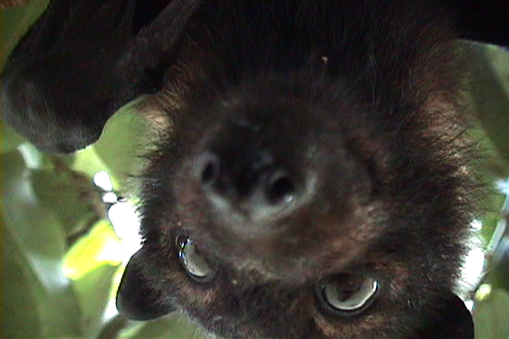 The Vanuatu Chronicles, video still, 1998. Video. 277 minutes.